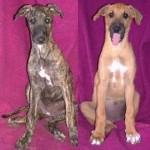 Nellie & Nookie