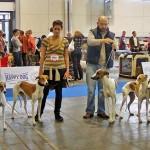 euro dog-show