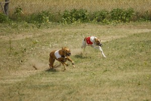 coursing 4