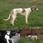 yamiro
