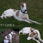yuliska