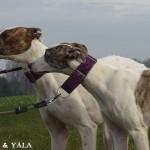 zuma und yala (1)