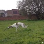 yamiro (7)
